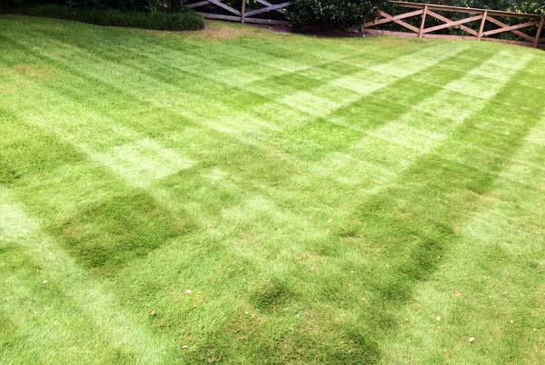 https://edringtongreenscapes.com/wp-content/uploads/2020/08/grass-stripes.jpg